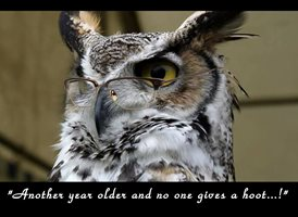 Birthday owl, humor,  cheeky, joke animals  z%a personalised online greeting card