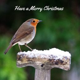 Gary Green Eyes Xmas Robin side on Christmas Robin  personalised online greeting card