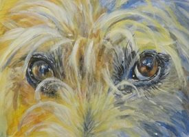 Little Liz Happy Art Those eyes! General dog, eyes, watching, looking, seeing, scruffy dog, hiary dog, roughhaired jack russell, jack russell, mutt, scruffy mutt, personalised online greeting card