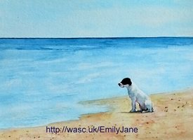 General dogs beach animals pets personalised online greeting card