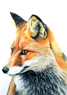 art  fox foxes animals wildlife for-her for-him personalised online greeting card