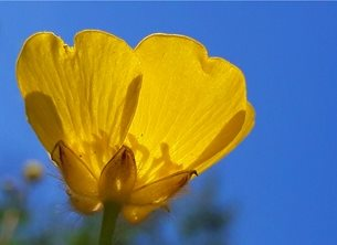photography  better soon buttercup yellow flower blue sky green grass nature bright sunny happy for-him for-her personalised online greeting card