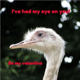 Valentine Valentines rheas birds animals eyes feathers for-her for-him personalised online greeting card