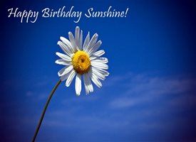 Wonky Doodle Designs Sunshine Birthday sunshine daisy sky blue  z%a personalised online greeting card