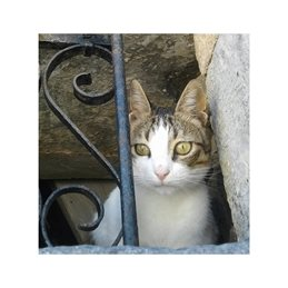 photography cast pets windows cute personalised online greeting card
