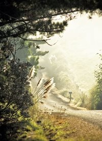General fairy, moody, landscape, road, home personalised online greeting card