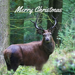 Gary Green Eyes Forest Stag christmas Stag Forest  personalised online greeting card