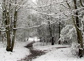 Photography christmas winter woods trees snow Belmont Surrey paths for-him personalised online greeting card