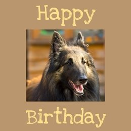 Birthday Belgian Shepherd dog, personalised online greeting card