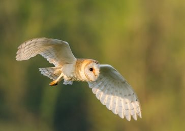 photography Barn, owl, bird, wildlife, nature personalised online greeting card