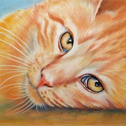 art artwork cat animals pets for-him for-her personalised online greeting card