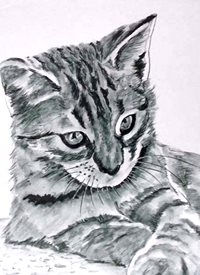 EmilyJane Proud cat art artwork cat pets animals for-him for-her for-children personalised online greeting card