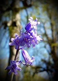 Photography photo bluebells spring tree blue for-her personalised online greeting card