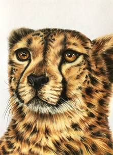 Art By Three  Cheetah cheetahs cats wildlife animals spots big cats personalised online greeting card