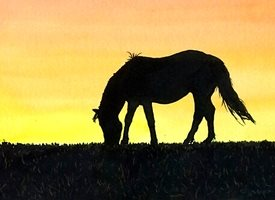 art artwork horse animals sunset for-her for-him personalised online greeting card