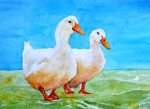 EmilyJane Two Ducks General artwork birds ducks farmyard pets  for-him for-her for-children personalised online greeting card