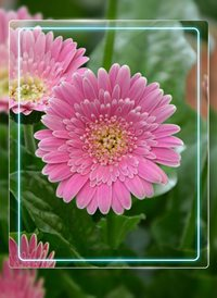 General flowers z%a personalised online greeting card