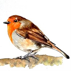 art artwork robin birds  wildlife  for-her for-him personalised online greeting card
