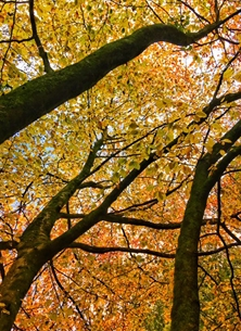 photography trees