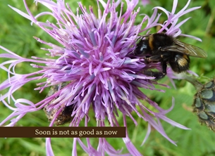 General soon not good now bee purple flower thistle grass brown pink green inspirational uplifting inspiring  CFT for-him for-her personalised online greeting card