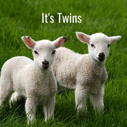 Baby  greeting cards by Gary Green Eyes Congratulations Twins Lambs New Born It's Twins