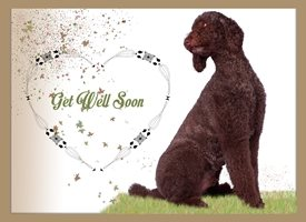 Get Well get well, dog, poodle, brown, sorry, personalised online greeting card