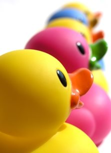 Photography General ducks