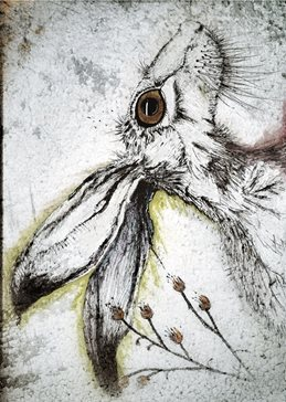 art HARE, RABBIT, EARS, WHISKERS, NOSE, BUNNY,  personalised online greeting card