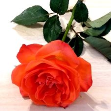 Photography rose flowers orange red green  mum daughter Nan aunt friend for-her personalised online greeting card