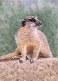 Art meerkat wildlife  animal personalised online greeting card