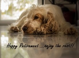 Retirement Retirement cute Dog Spaniel personalised online greeting card
