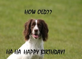 Birthday Cute Spaniel Dog personalised online greeting card