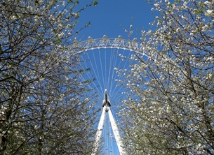 Photography London eye spring trees blossoms tourists attractions rides personalised online greeting card