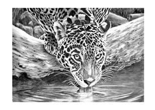 General leopard animals zoo wildlife monochrome black white   mum dad son daughter Nan granddad friend aunt uncle personalised online greeting card