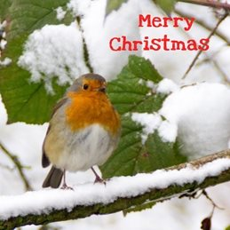 Christmas Christmas birds Robin bird snow redbreast photography  personalised online greeting card