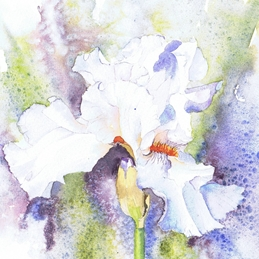 General Iris, white, flower, floral, sparkling personalised online greeting card