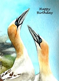 Birthday artwork gannet birds wildlife for-him for-her personalised online greeting card