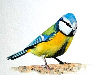 art artwork birds wildlife tit for-her for-him personalised online greeting card