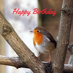 Gary Green Eyes Birthday Robin on a branch Birthday Robin personalised online greeting card