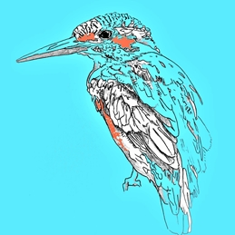 Art kingfisher bird wildlife art abstract popart modern personalised online greeting card