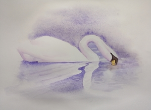serene, tranquility, swan, mauve, nature, water, waterbirds, artistic, general personalised online greeting card