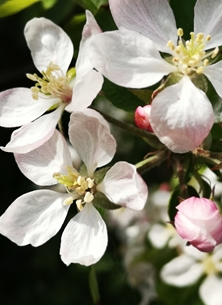 Photography Flowers, blossom, spring, colours personalised online greeting card