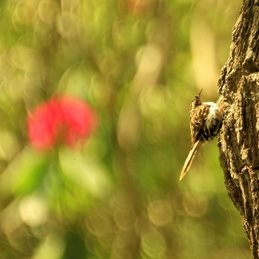 Photography Baby Tree Creeper, Bird, Tree, Bushy Park personalised online greeting card