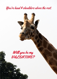 Valentine Valentines giraffes animals wildlife for-her for-him personalised online greeting card