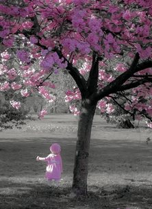 Photography cherry blossom girl baby congratulations newborn pink tree  personalised online greeting card