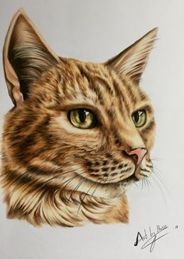 art Cats ginger animals  for-him for-her eyes orange pets pencils  general blank all occasions art him her  personalised online greeting card