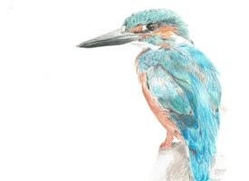 General kingfisher, bird, fine art, animal, wildlife, sophielouisecreates personalised online greeting card