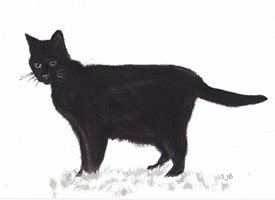 General Black Cat lucky  personalised online greeting card