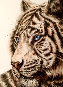 "Art By Three  White Tiger  art White Tiger animals big cats wildlife zoo nature white black stripes ""him"" ""her"" ""Child"" for-kids for-her for-him personalised online greeting card"