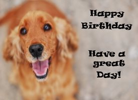 Birthday  Spaniel Dog personalised online greeting card
